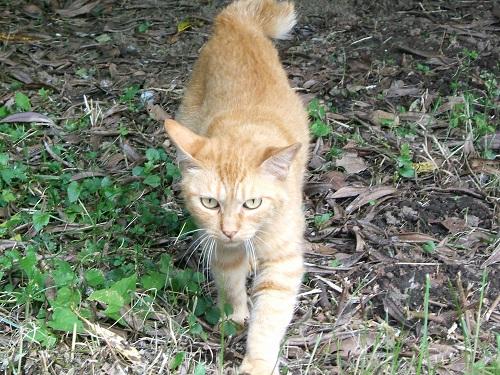 水元公園の猫2_e0089232_2315317.jpg