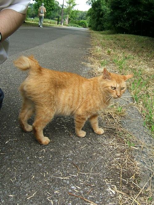 水元公園の猫2_e0089232_2321810.jpg