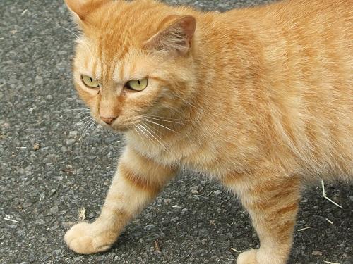 水元公園の猫2_e0089232_23223.jpg