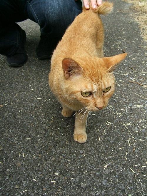 水元公園の猫2_e0089232_2322581.jpg