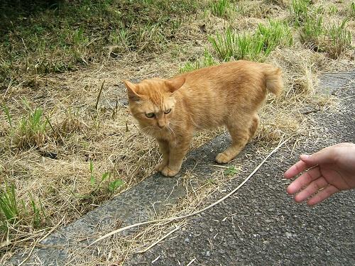水元公園の猫2_e0089232_232964.jpg