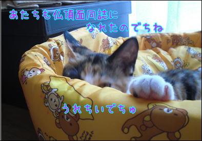 d0139352_1153597.jpg