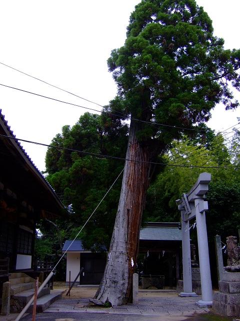 榊山神社その1 神殿_b0095061_20115868.jpg