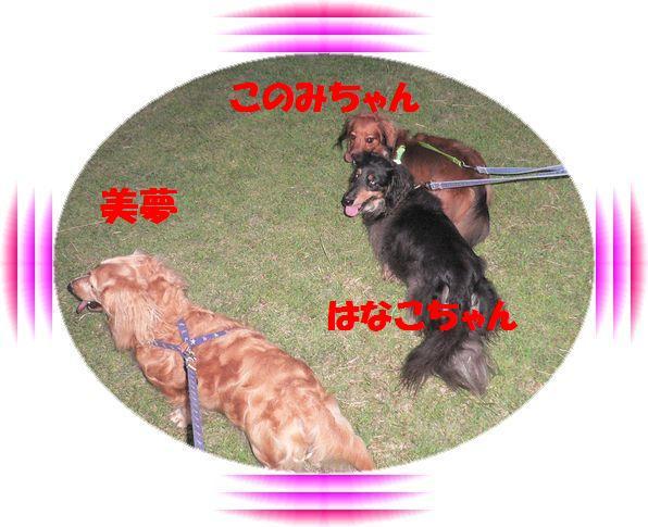 f0178701_1653253.jpg