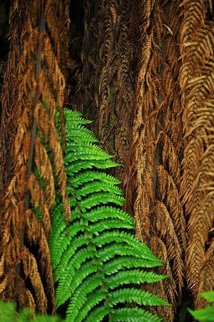 森の中の発見_f0050534_2354122.jpg