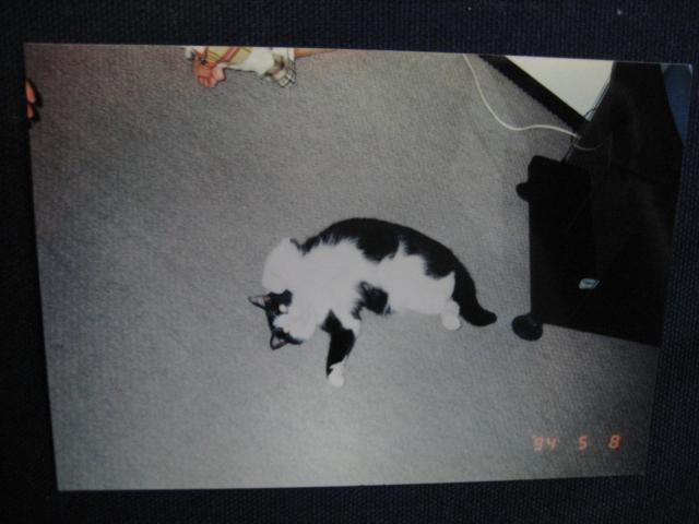 f0166735_1045284.jpg