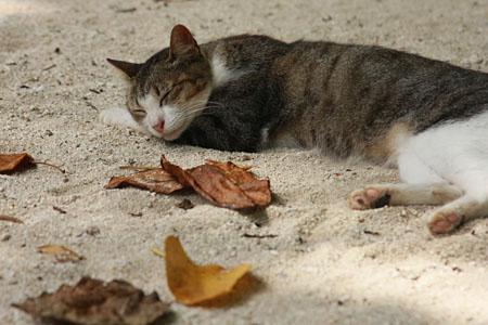 八重山諸島で猫探し 竹富島編_d0034352_2111281.jpg