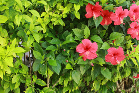 八重山諸島で猫探し 竹富島編_d0034352_21154160.jpg