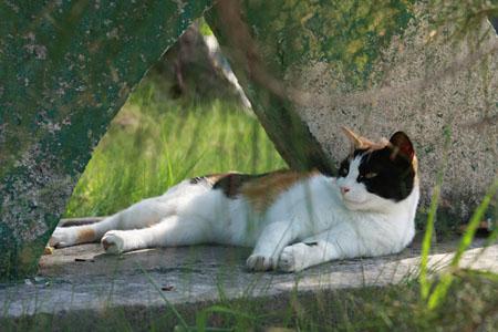 八重山諸島で猫探し 竹富島編_d0034352_2129539.jpg