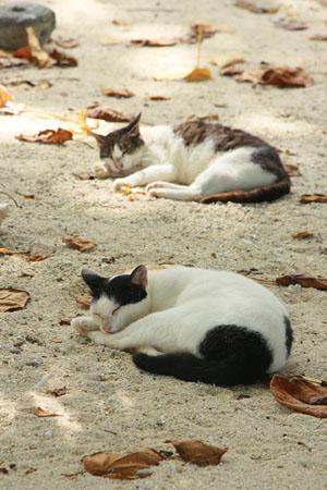 八重山諸島で猫探し 竹富島編_d0034352_2192674.jpg