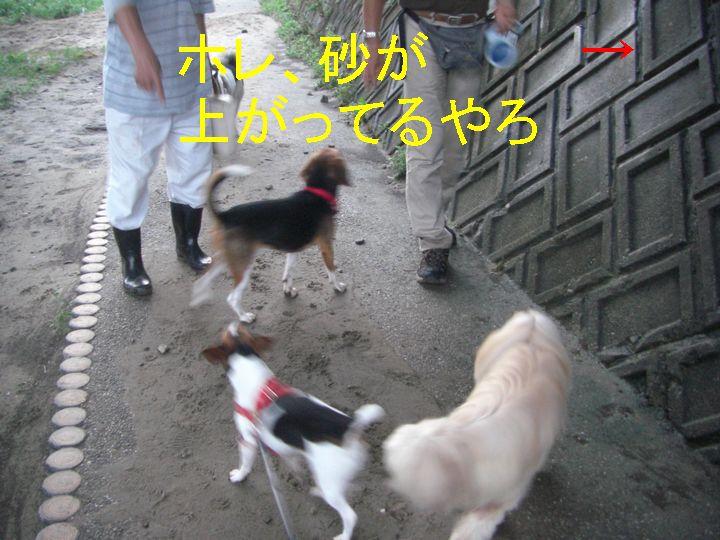 f0053952_1213360.jpg