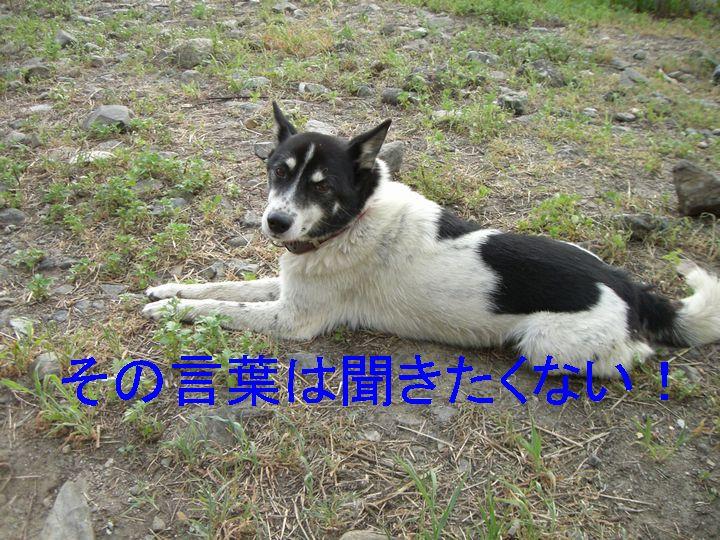 f0053952_12181136.jpg