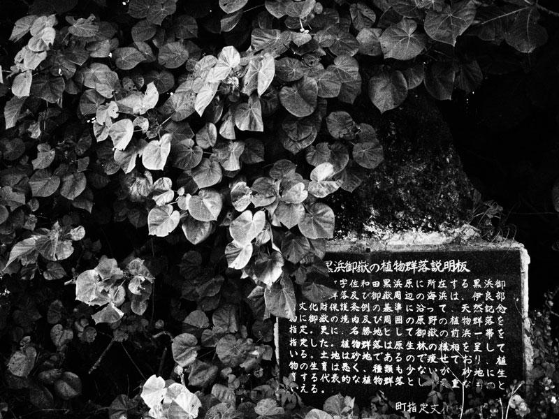 E-P1で撮る宮古諸島(9)_e0004009_0244868.jpg