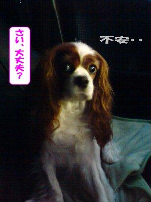 b0185323_16491625.jpg