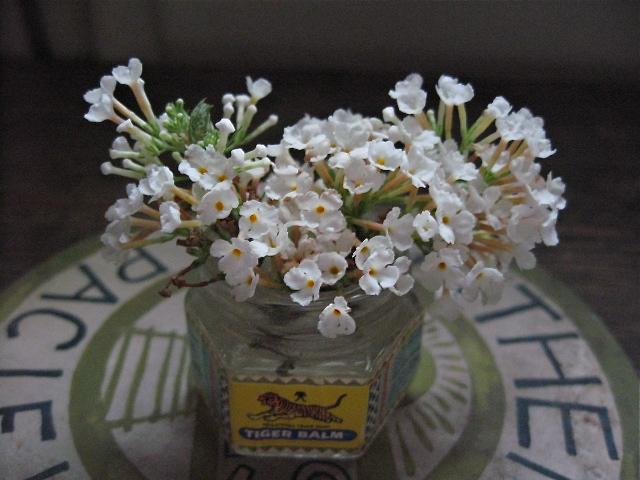 タイガーバームの空き瓶に花をいける_d0101846_5365941.jpg