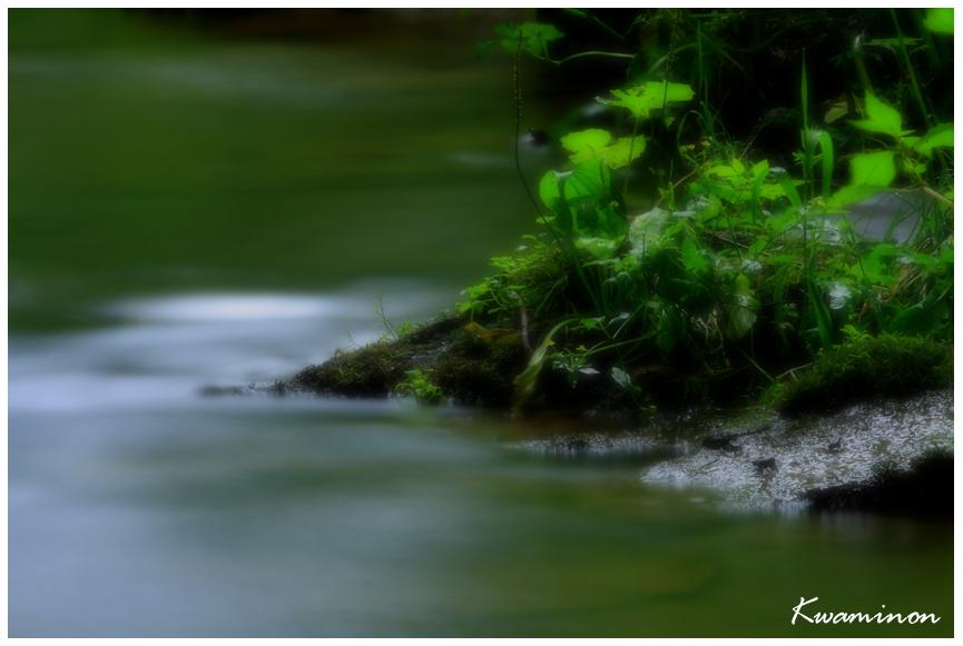 緑流。_a0103257_0433456.jpg