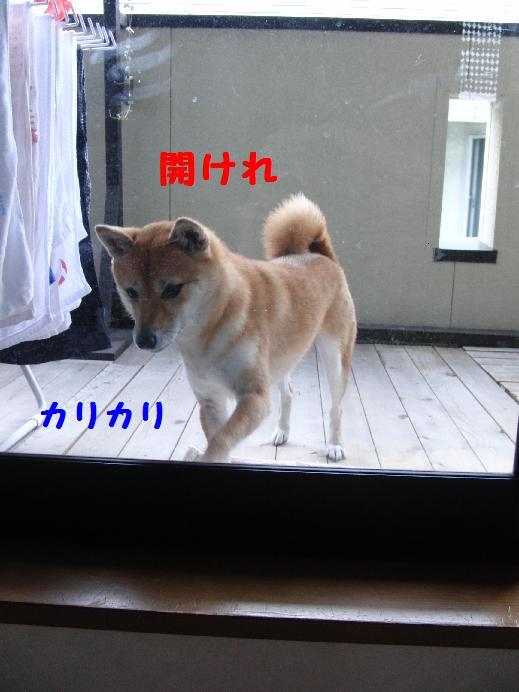 b0150665_21424846.jpg