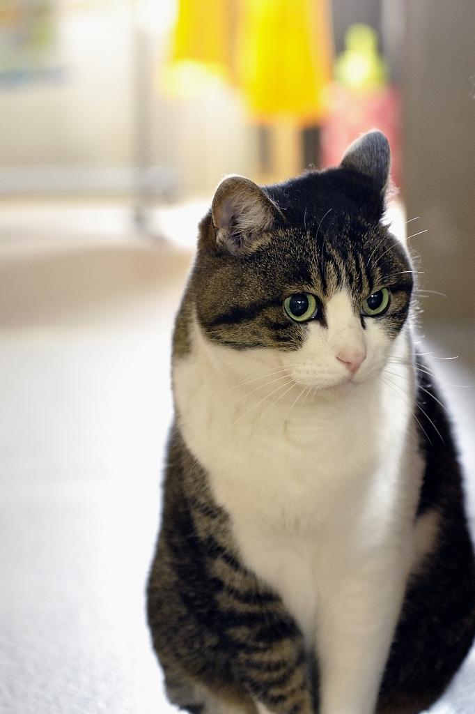 猫、初登場♪_e0171886_21262634.jpg