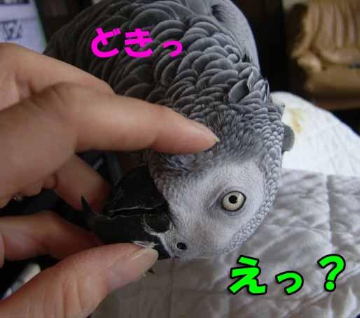 c0133013_14152560.jpg