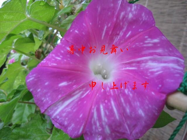 c0197220_10365536.jpg