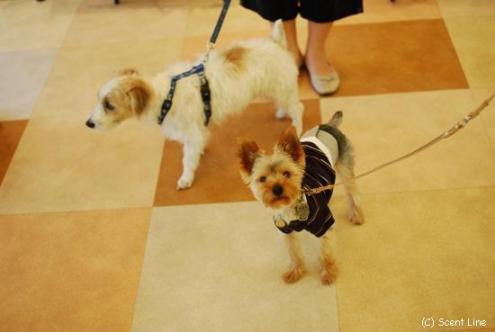 犬の勉強会 8月_c0099133_646399.jpg