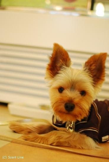 犬の勉強会 8月_c0099133_6465493.jpg