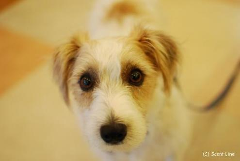 犬の勉強会 8月_c0099133_647678.jpg