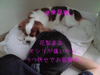 a0120944_15381757.jpg