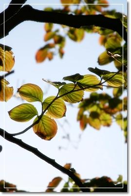 d0013149_2316103.jpg