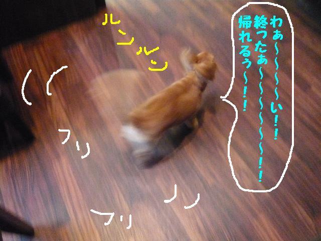 b0130018_16262096.jpg