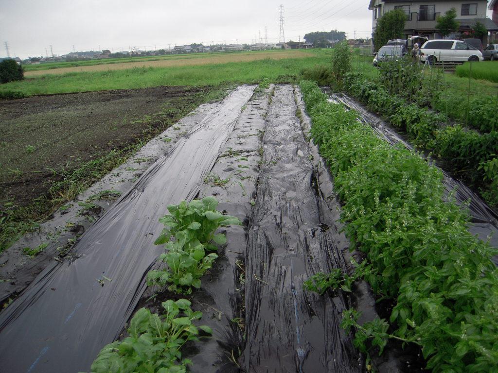 農業のお時間。_b0179052_350573.jpg