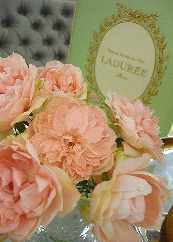 薔薇の花びらに 感謝の心を託す お誕生日。。。☆。。。.☆*:.。.☆*†_a0053662_1211189.jpg