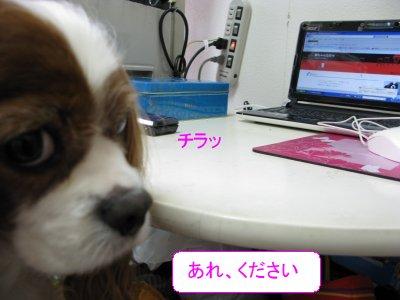 b0185323_17101237.jpg