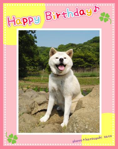 ひめちゃん、お誕生日おめでとう♪_d0102523_12592974.jpg