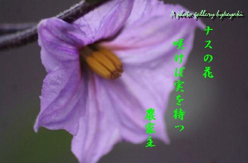 b0173244_2092464.jpg