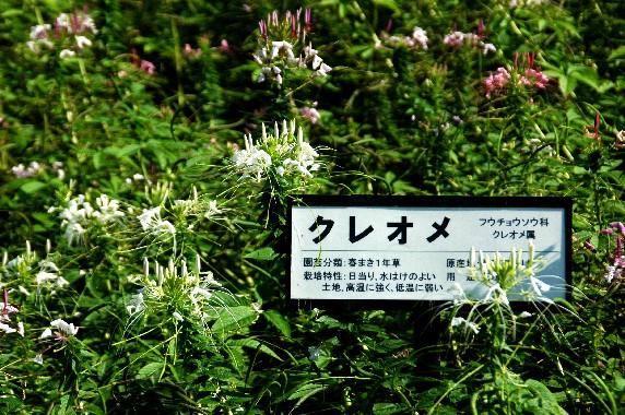 和歌山県植物公園緑花センター _b0093754_23544813.jpg