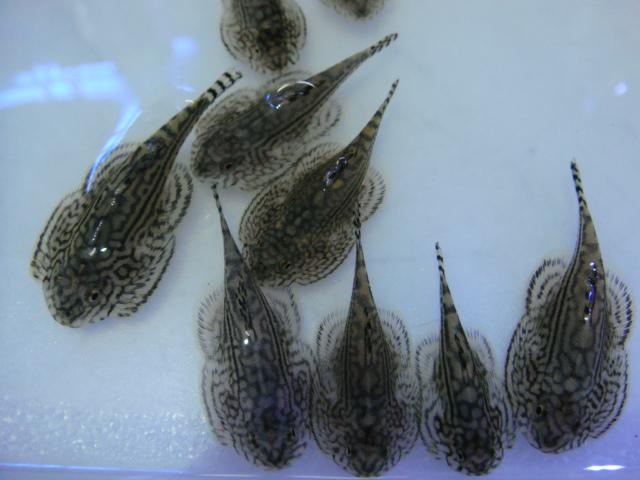 熱帯魚・金魚・水草_f0189122_15352385.jpg