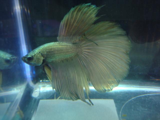 熱帯魚・金魚・水草_f0189122_15382649.jpg