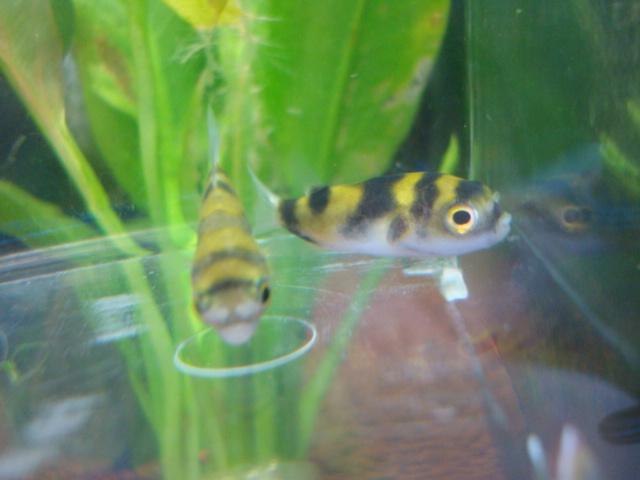 熱帯魚・金魚・水草_f0189122_15473246.jpg