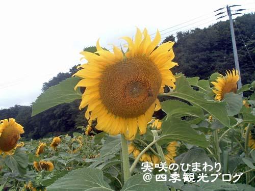 f0105342_11125059.jpg