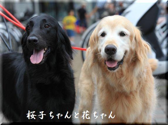 2009 犬だらけの水泳大会 in 青梅_c0134862_23561039.jpg