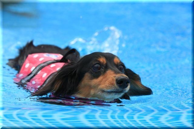 2009 犬だらけの水泳大会 in 青梅_c0134862_23571694.jpg