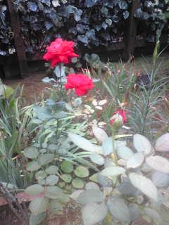 季節はずれ?と旬の花♪それにお知らせです☆_c0131063_1044093.jpg