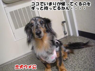 d0020869_16301957.jpg