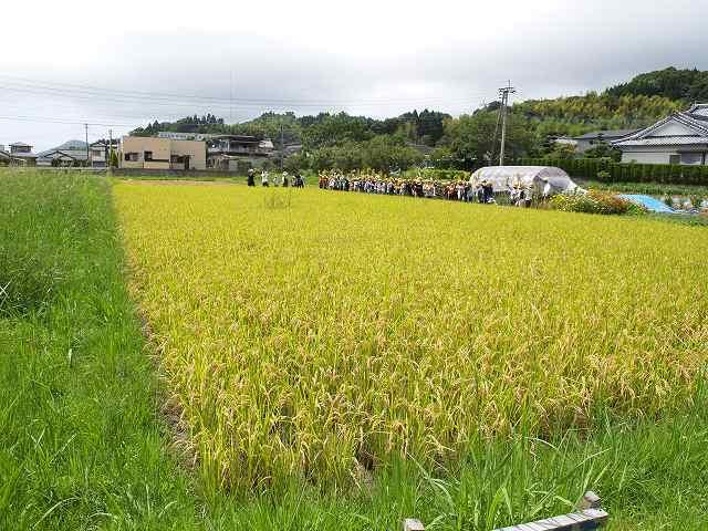 稲刈り_b0135573_12475134.jpg