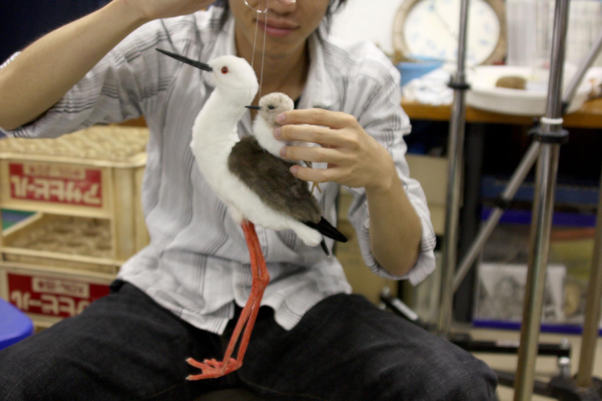 鳥類園のぬいぐるみ紹介②_e0046474_10364061.jpg