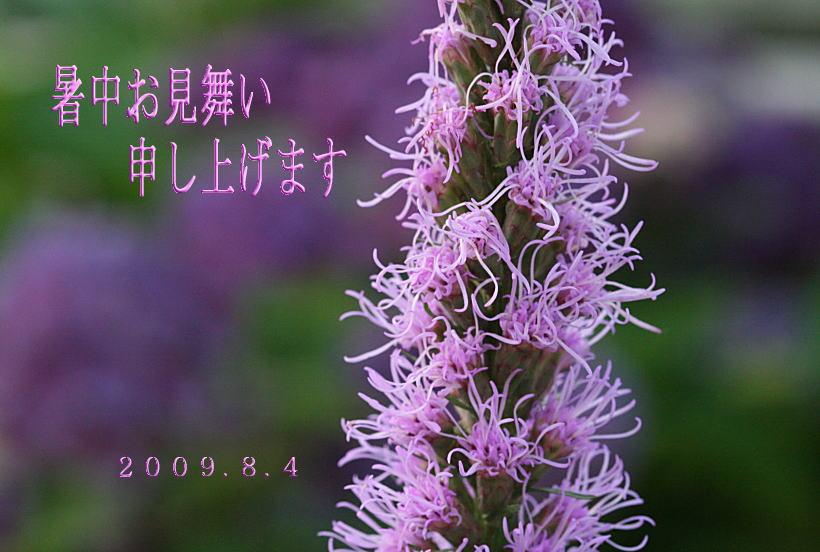 c0112479_8122978.jpg