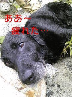 夏は川遊びだ!_f0148927_17133738.jpg