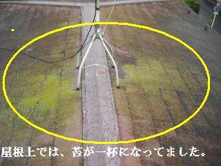 f0031037_2231845.jpg