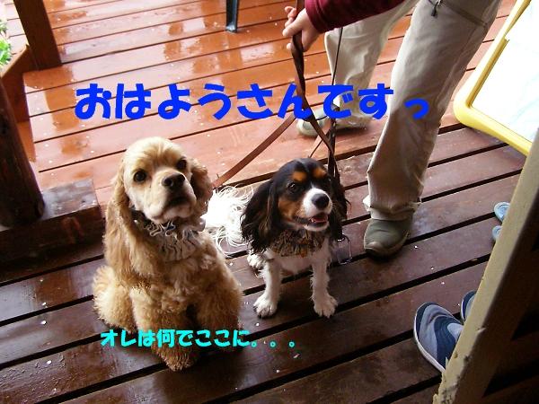 b0067012_212693.jpg